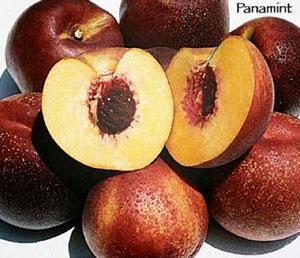 juicy Panamint nectarines
