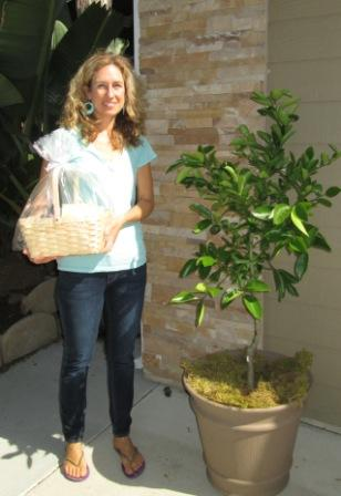 lemon tree, patio tree, citrus tree, gift tree