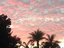 sunset in Encinitas, palm trees