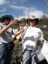 fruit tree pruning, free workshop,