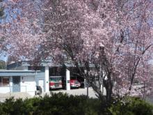 spring tree in bloom