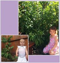 baby and same child at 4 year old with tree planted for her birth