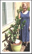 pretty blond lady with patio lemon tree