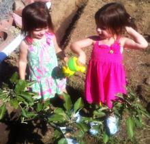 two little girls and their apple tree