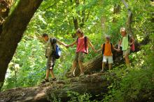 children crossing a fallen log in the forest