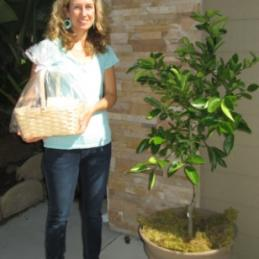 lemon tree, patio tree, citrus tree, gift tree